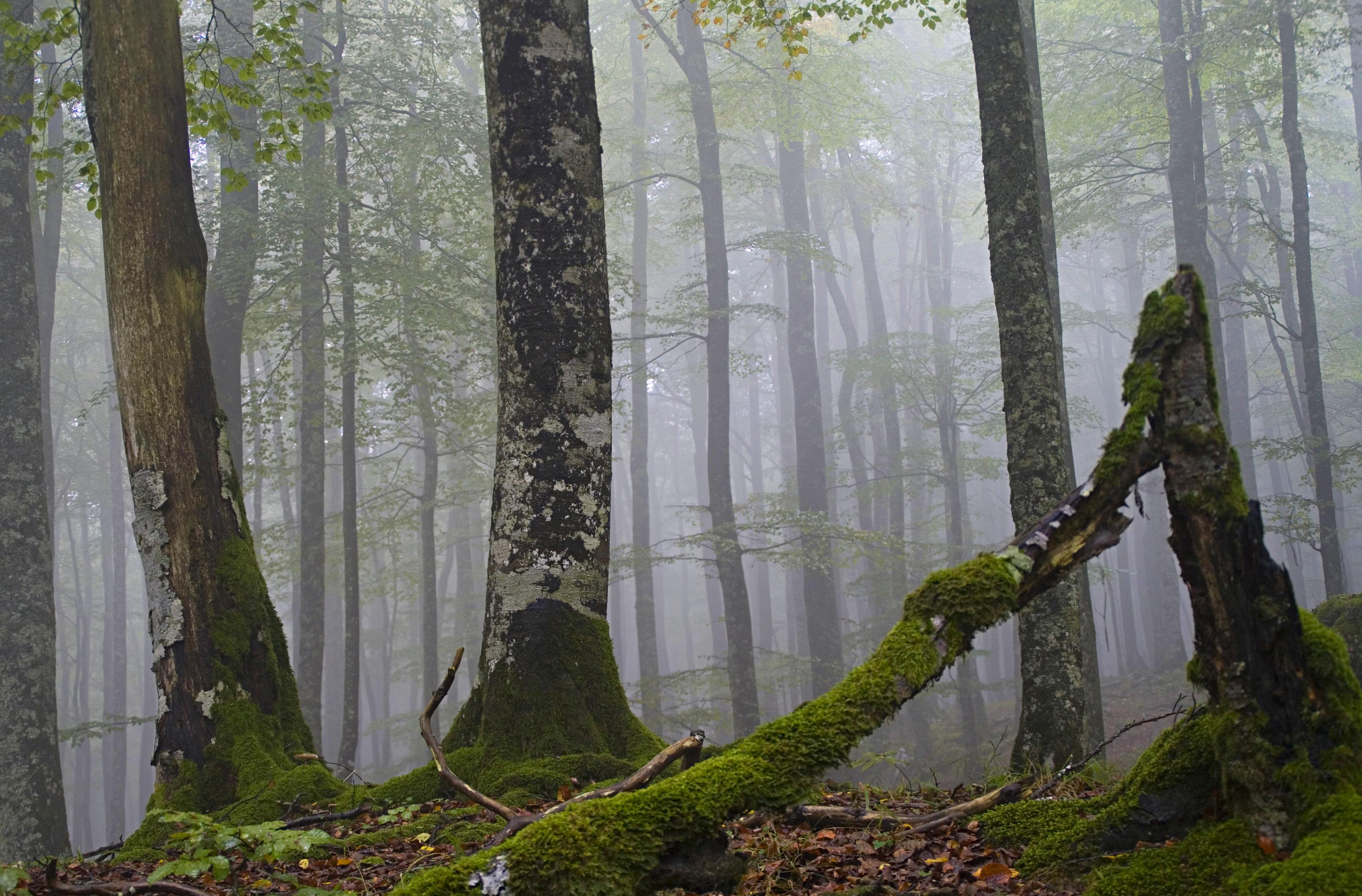 bosque artea