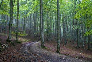 Bosque encantado Artea